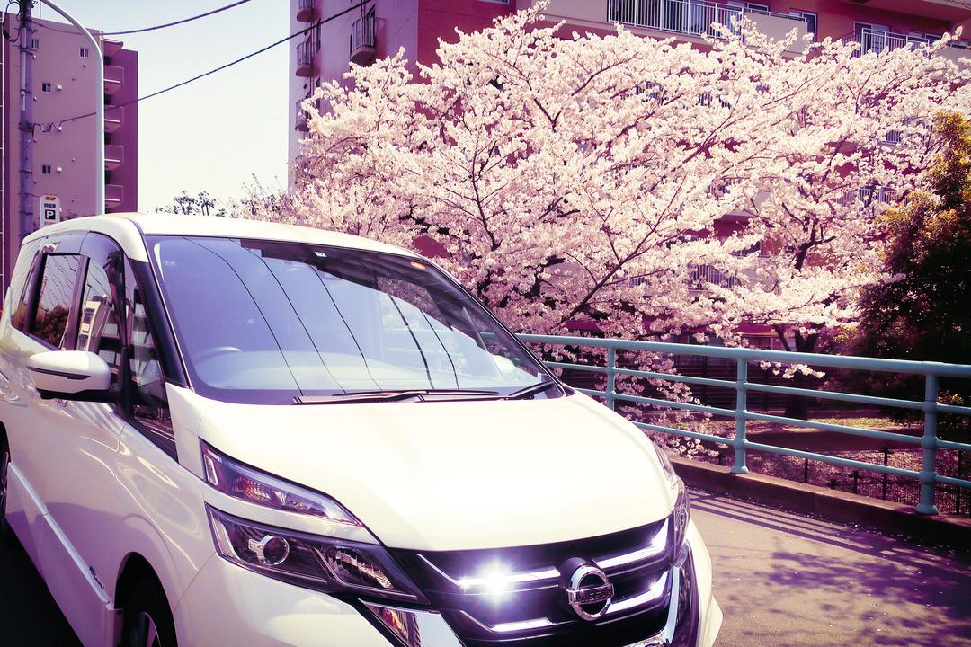 桜とセレナ