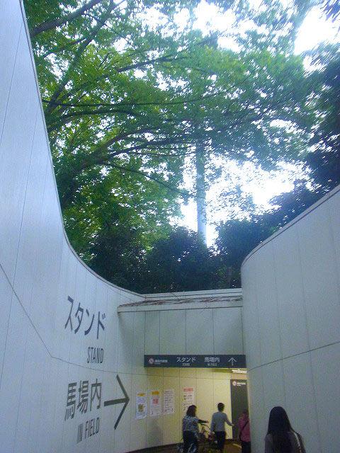東京競馬場花火大会 (2)