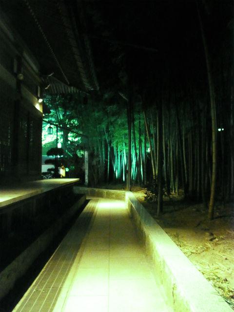 2012桜 (15)