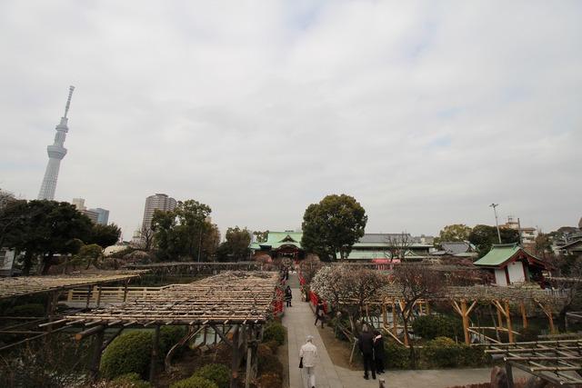 亀戸天神社 (74)