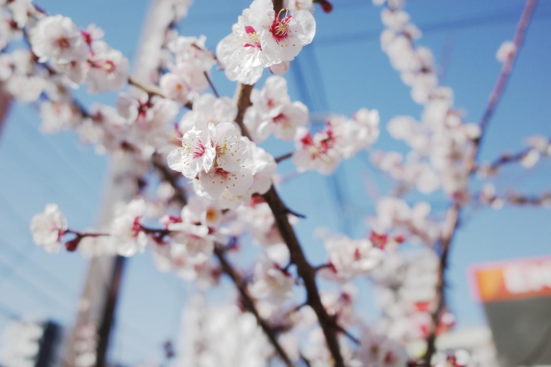春の訪れと喫茶店  (1)