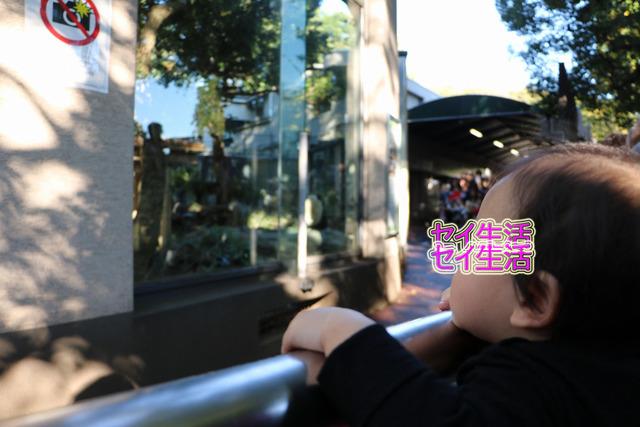 上野動物園 (6)