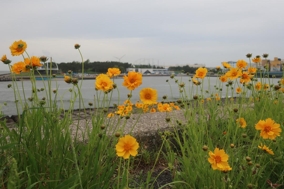 夢の島緑道公園 (7)