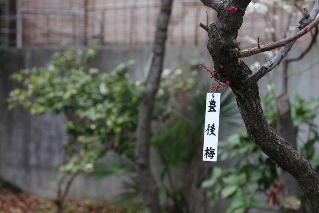亀戸天神社 (51)