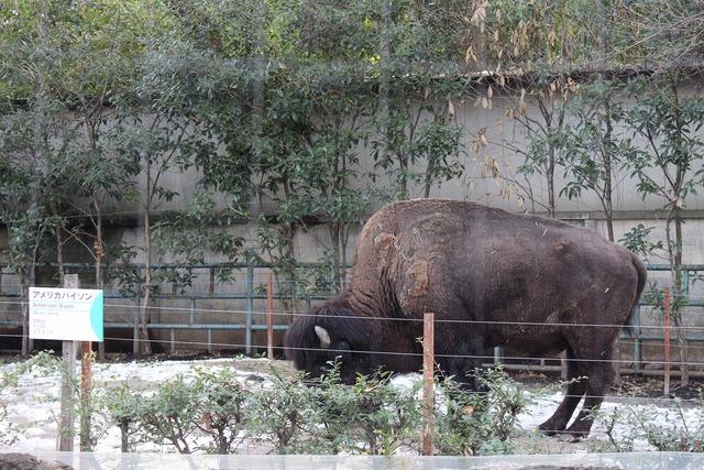 上野動物園 (34)