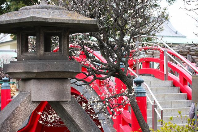亀戸天神社 (42)