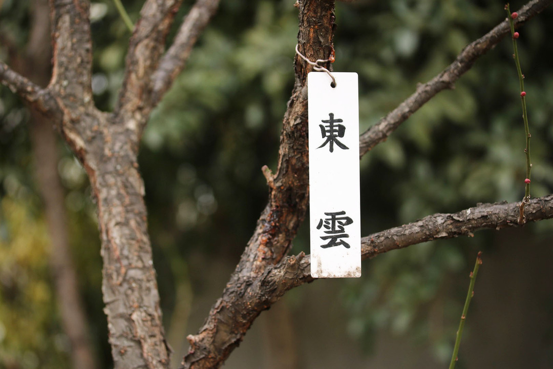 亀戸天神梅まつり (6)