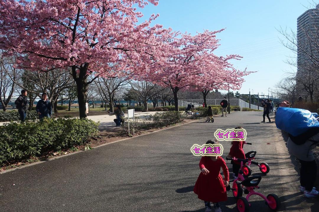 小松川公園 (22)
