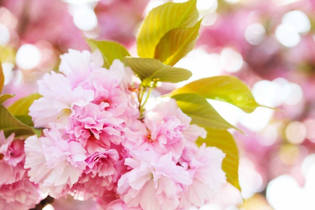 春の日 (2)