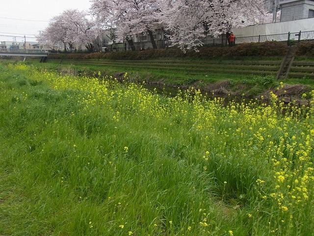 春 (7)