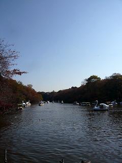 井の頭公園・池とスワン
