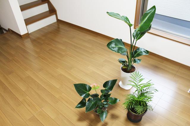 観葉植物 (6)
