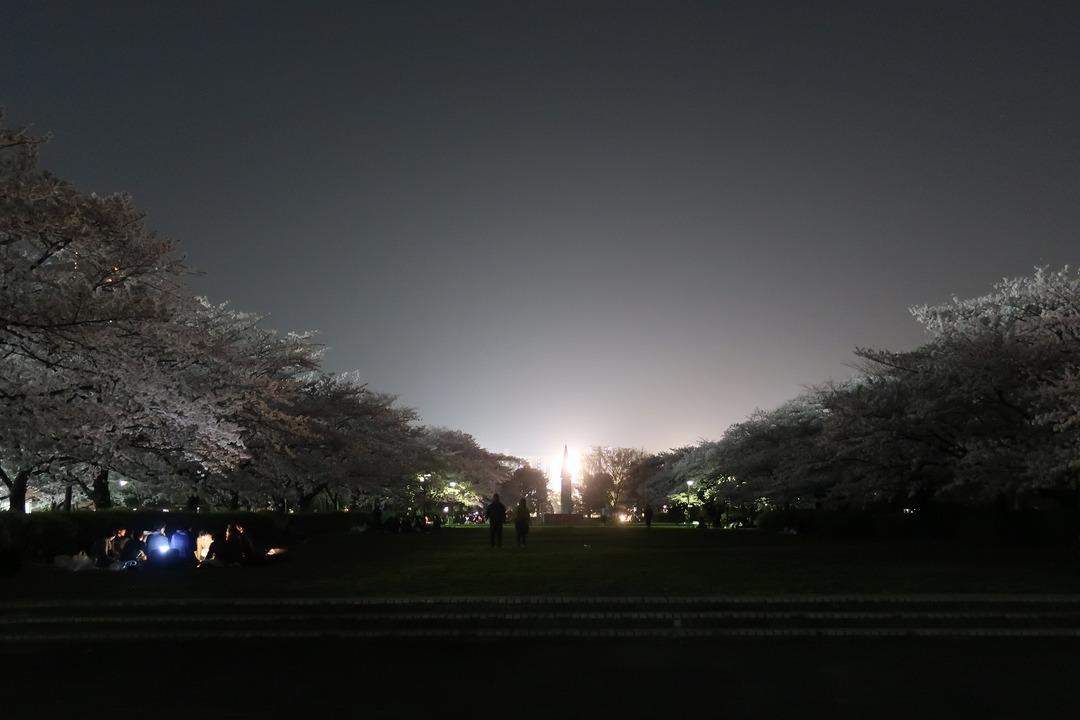夜の桜 (4)