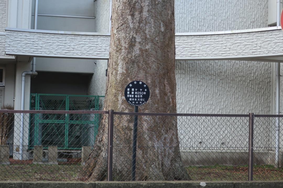 仙台実家 (1)