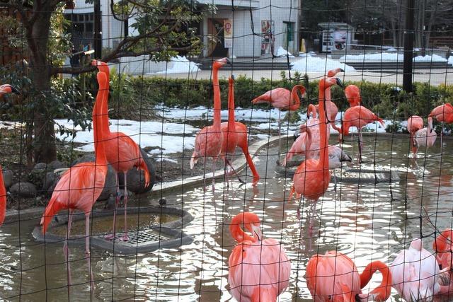 上野動物園 (26)