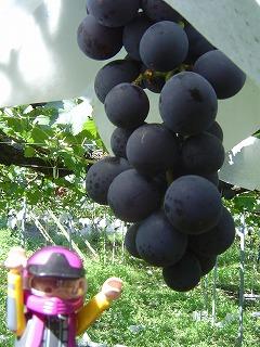 葡萄とスロライ君