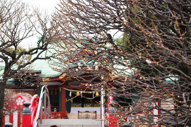 亀戸天神社 (41)