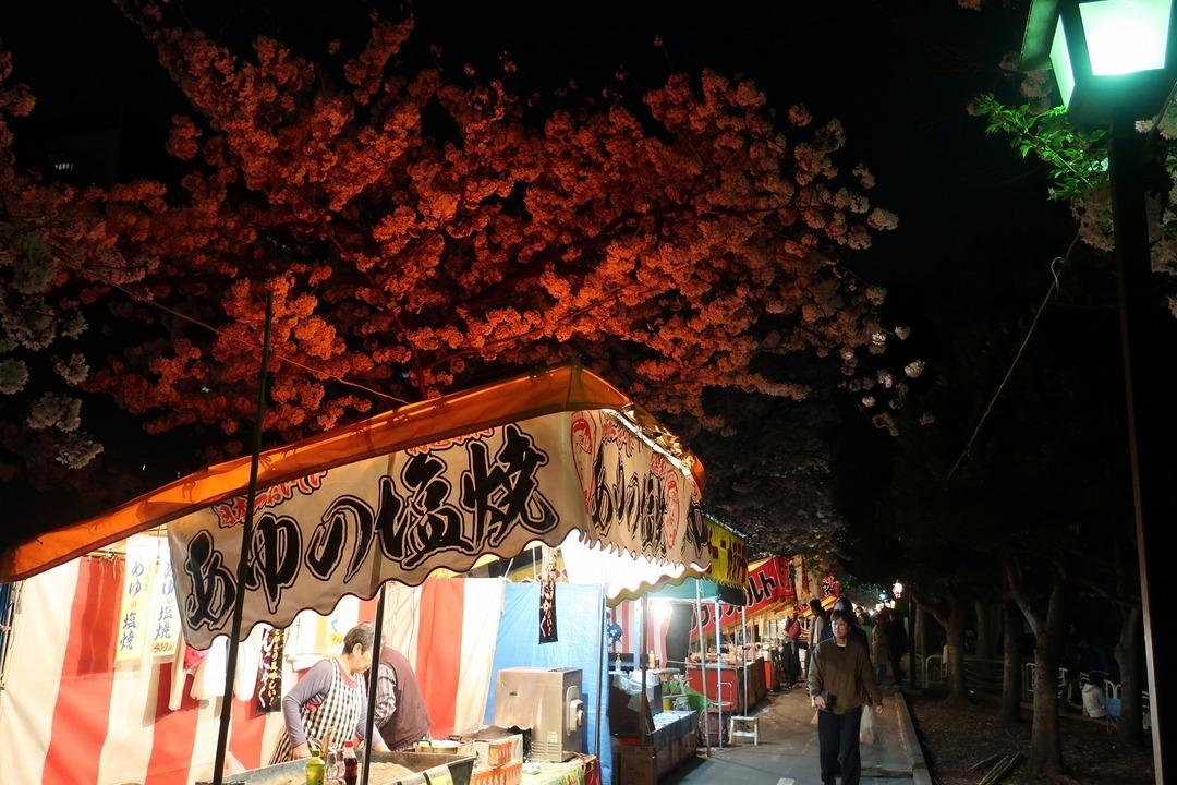 夜の桜 (8)