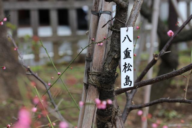 亀戸天神社 (34)