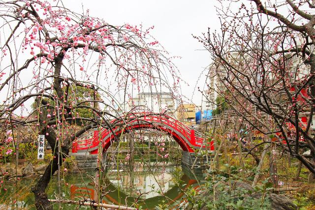 亀戸天神社 (76)