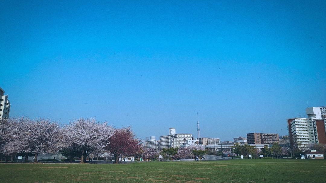 春の公園 (3)