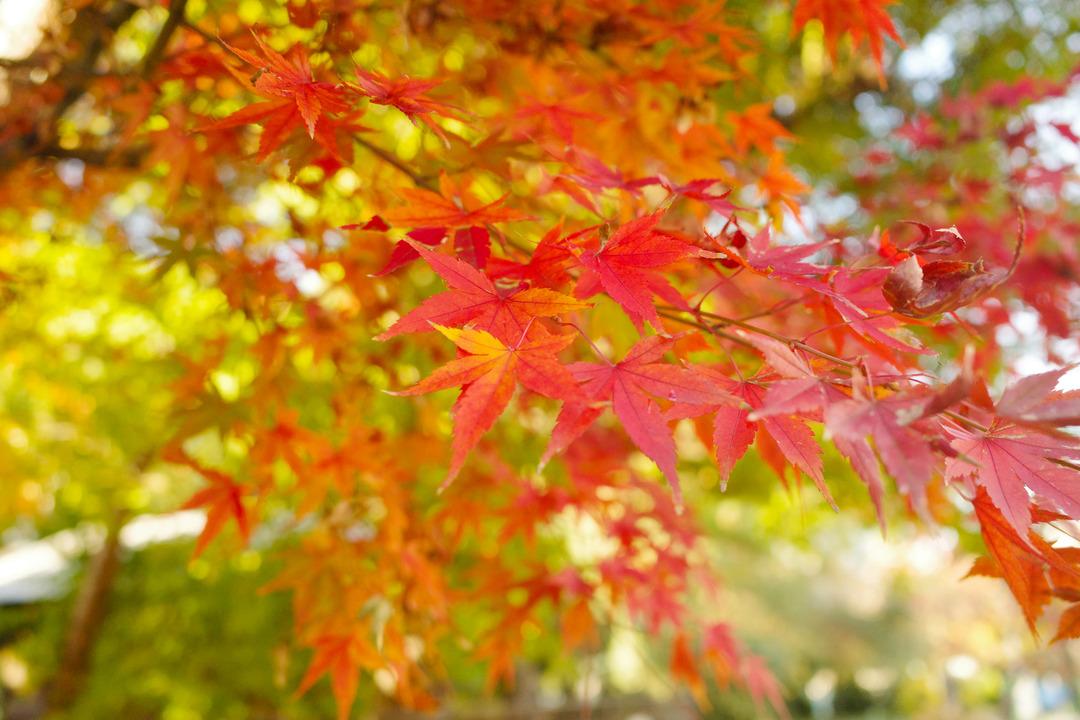 東京の下町の秋を見つけに散歩 (23)