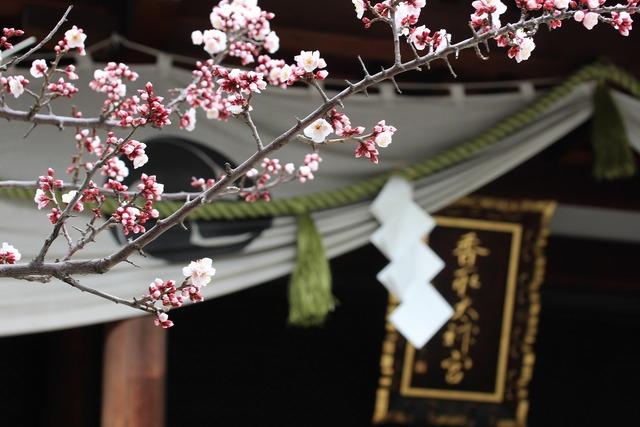 香取神社 (8)