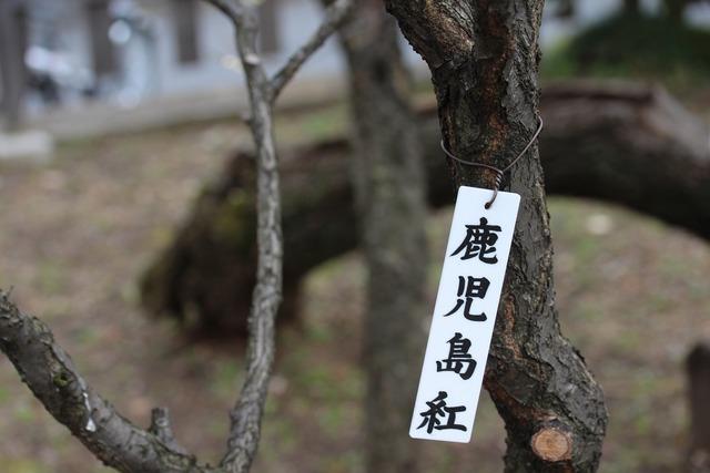 亀戸天神社 (13)