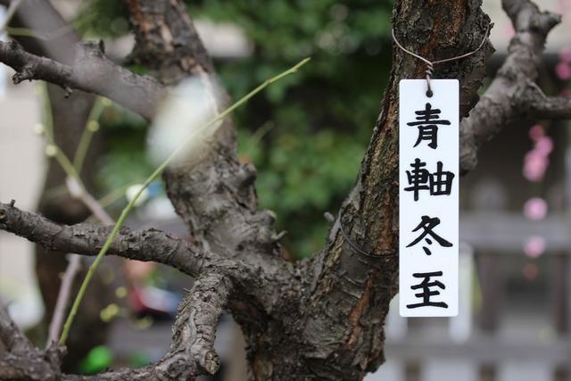 亀戸天神社 (22)