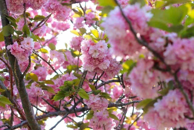 春の日 (1)