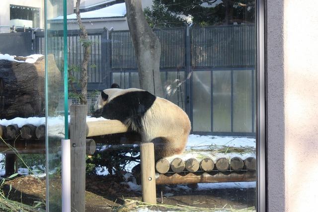 上野動物園 (4)