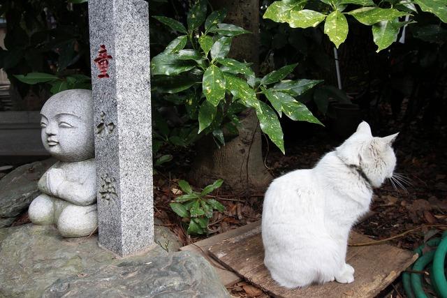 天祖神社 (19)