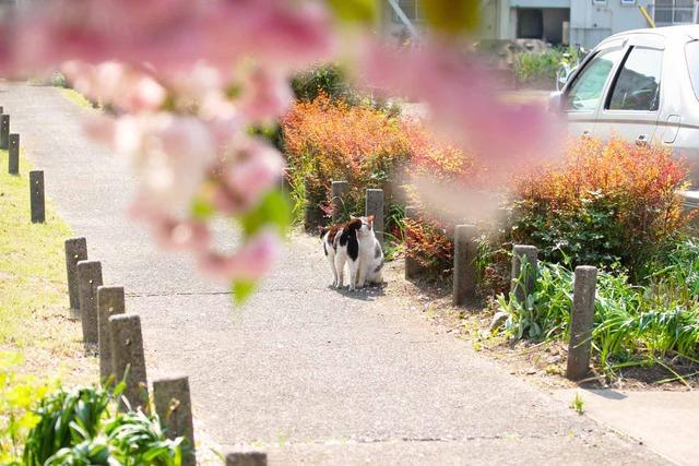 春の日 (6)