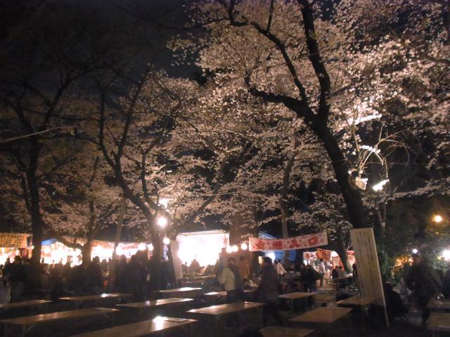 2012桜 (7)
