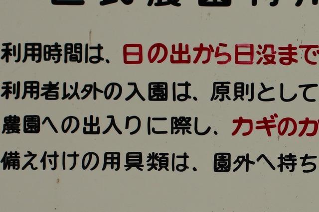 畑 (6)