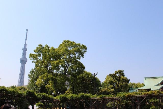 亀戸天神 (9)
