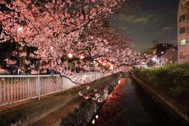 仙台堀川公園桜まつり,jpg (1)