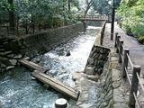 等々力不動尊の川と橋
