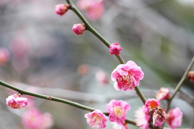 亀戸天神社 (56)