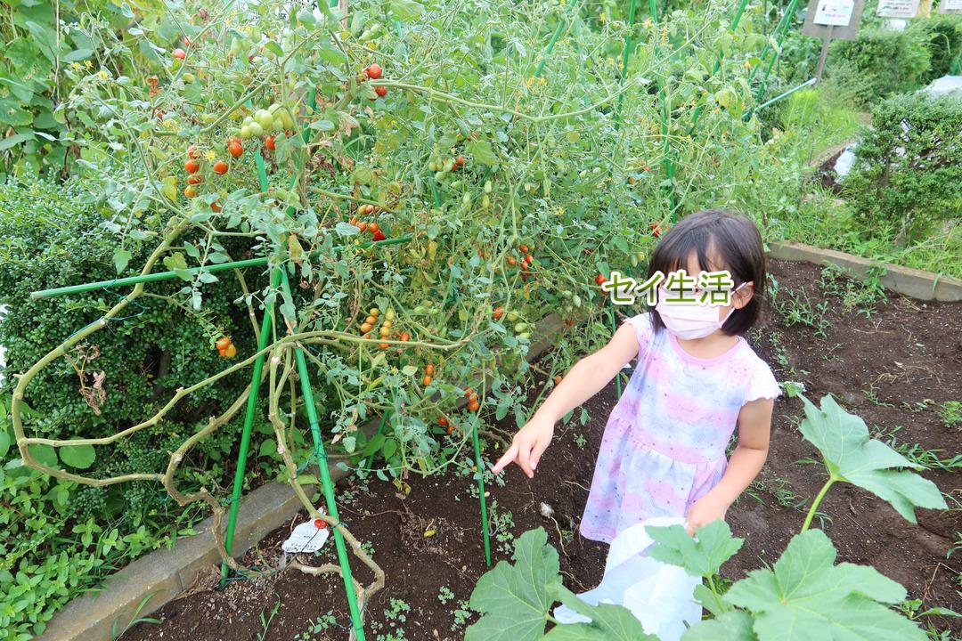 農園で採れた野菜 (5)