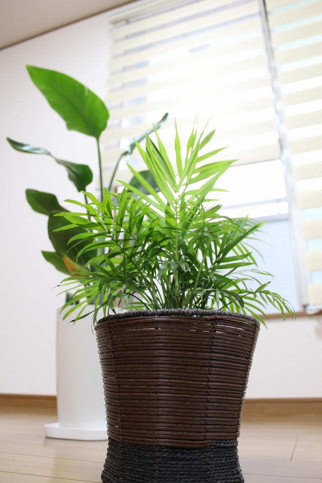 観葉植物 (3)