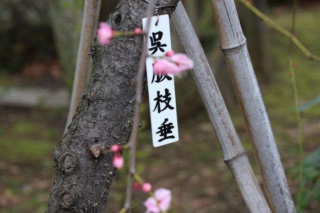 亀戸天神社 (61)