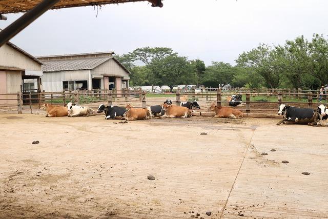 成田ゆめ牧場 (2)