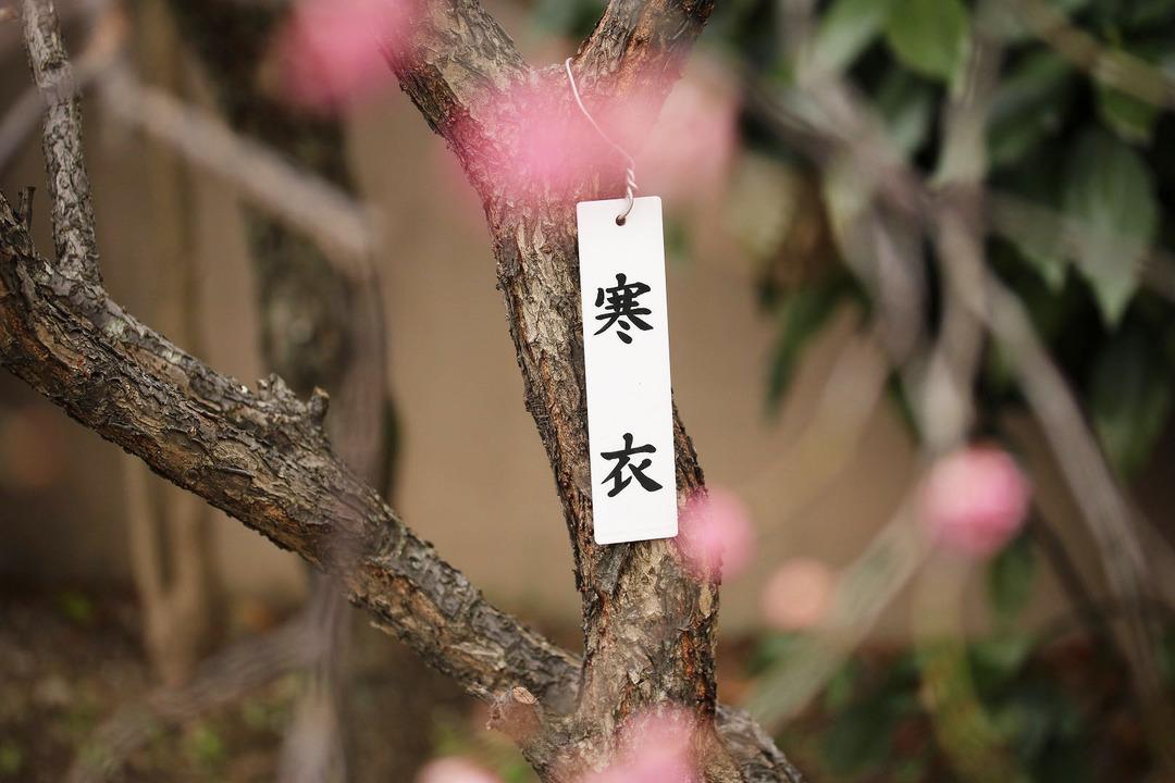 亀戸天神梅まつり (10)