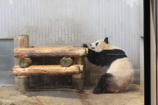 上野動物園 (35)