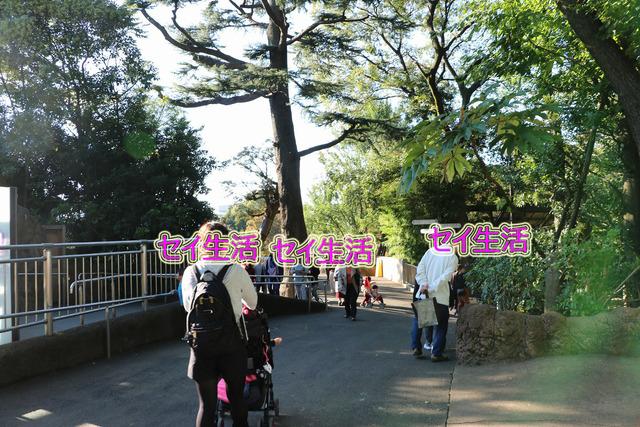 上野動物園 (17)