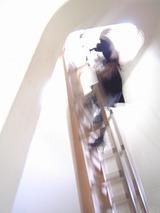 梯子と彼女