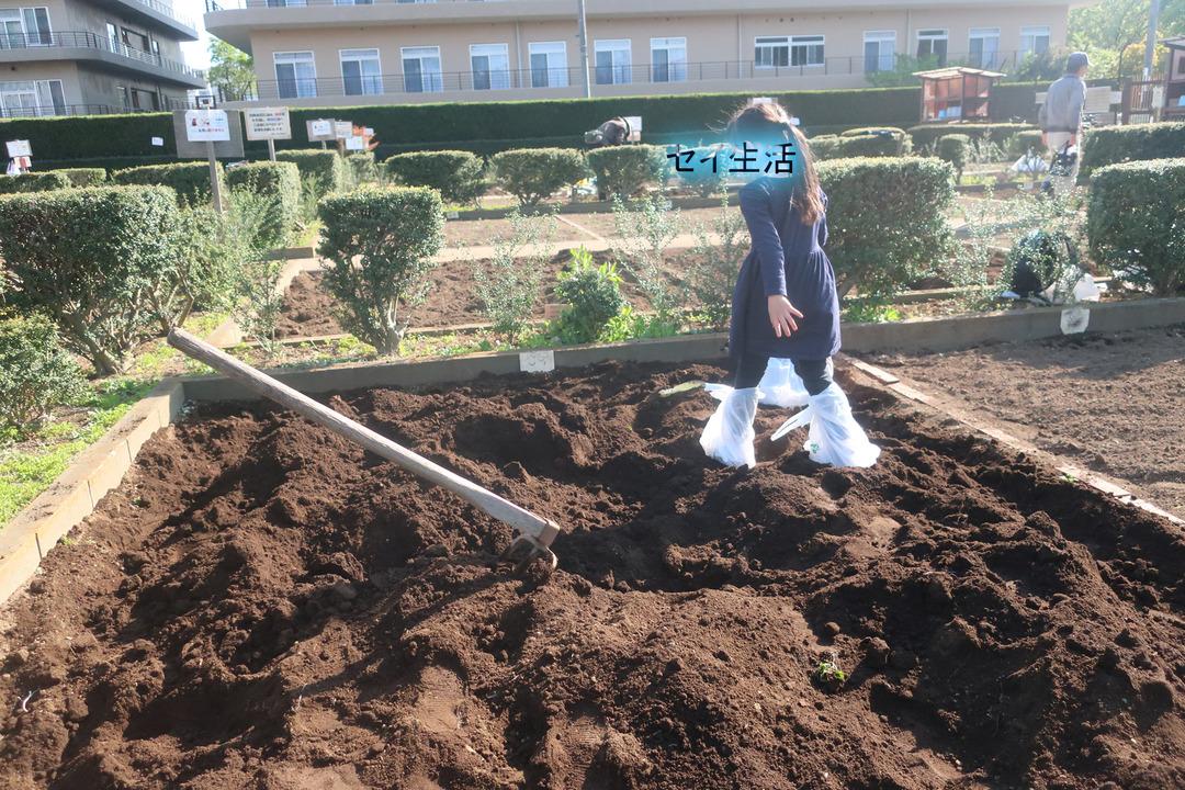 区民農園 (6)