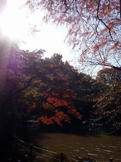 井の頭公園・池と紅葉