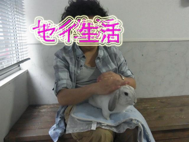 うさぎカフェ (41)